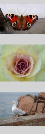 http://a-livre-ouvert.cowblog.fr/images/Tuto/nvbfx.jpg